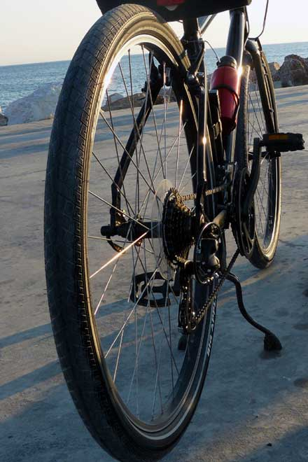 Scrabler: Specialized Globe Vienna with Big Apples 622-50